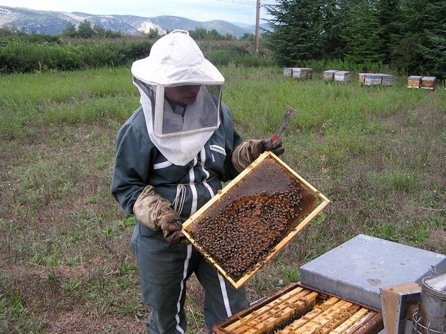visite de ruche à l'automne