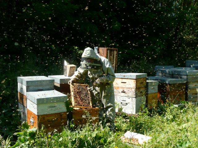 viste de ruche en mai
