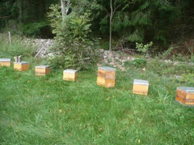 notre petit rucher de warrés