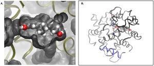 gelée royale - molecule de ses lipides