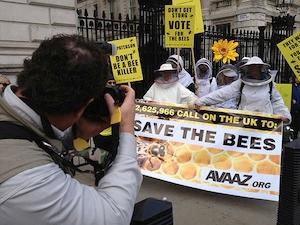 marche pour les abeilles