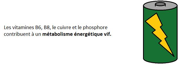 Propriétés gelée royale métabolisme énergétique