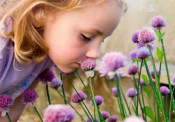 éviter de s'approcher à des fleurs très parfumées ou à des fruits très mûrs