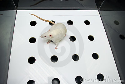 le test de la planche avec trou (hole-board)
